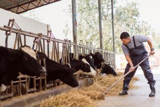 В Мурманской области фермеры получат гранты на развитие животноводства