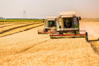 Более 4,6 млн т зерна намолочено в Воронежской области — это первое место в ЦФО