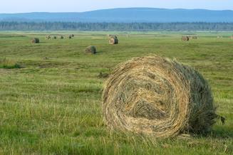 В Красноярском крае подходит к концу заготовка сена и сенажа