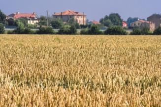 Аграриям Новосибирской области перечислено 1,28 млрд руб. господдержки — 50,3% от лимита