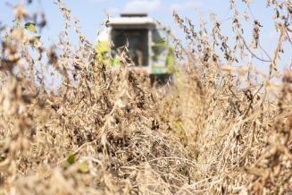 3,3 млрд руб. направлено 39 регионам на увеличение производства сои и рапса