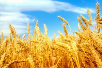В Кабардино-Балкарии завершена уборка зерновых и зернобобовых культур