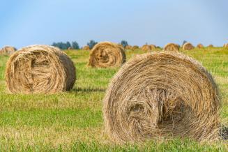 В Тверской области травы скошены на 45% площади от плана