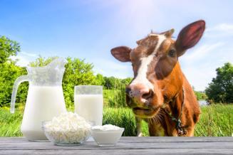 Наразвитие молочного скотоводства вОмской области в2020 году выделено на62% больше средств, чем в 2019 году