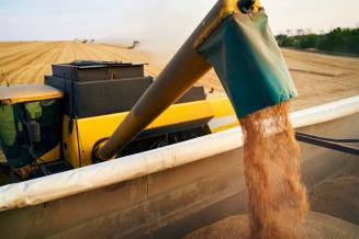 Ростовская область может получить второй в истории урожай зерна