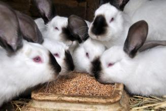 На средства гранта «Агростартап» в Ленинградской области построен комплекс на 3 тыс. кроликов