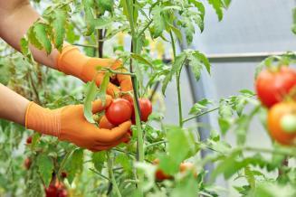 Дальний  Восток к 2024 году должен самостоятельно обеспечивать себя овощами