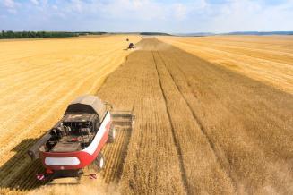 Минсельхоз сохраняет прогноз урожая зерновых — 122 млн т в 2020 году