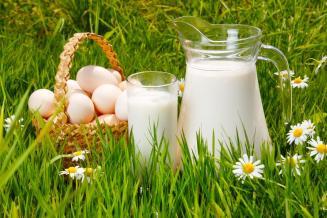 Владимирская область — в топ-5 регионов ЦФО по объемам реализации яиц и молока