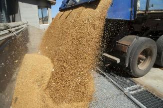 В Ульяновской области впервые с 1973 года собрали 2 млн т зерна