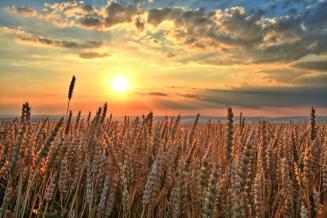 Bloomberg: Россия может собрать второй по величине урожай зерновых за всю историю
