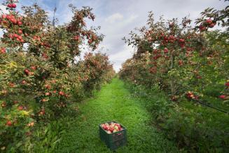 Садоводы Ставрополья получили более 500 млн рублей субсидий