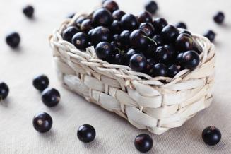 На Урале вывели новые сорта вишни и смородины с крупными ягодами