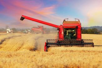 Четыре района Пермского края начали уборку зерна
