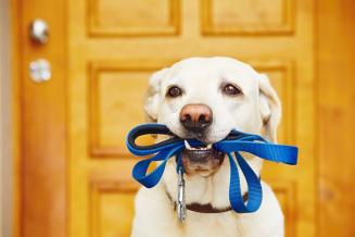 Маркировка домашних животных может стать обязательной в РФ с 2021 года