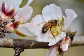 России удалось избежать повторения массовой гибели пчел