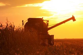 В Калмыкии намолочено 584,1 тыс. т зерна