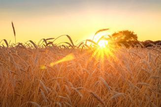 В Сибири создадут программу развития зернового рынка до 2025 года