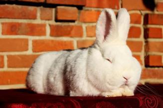 Поголовье кроликов наферме «Эко Фуд» вЗабайкалье виюне достигло 44 тыс. голов