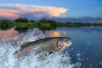 Д. Патрушев: госпрограмма развития рыбохозяйственного комплекса будет продлена до 2030 года