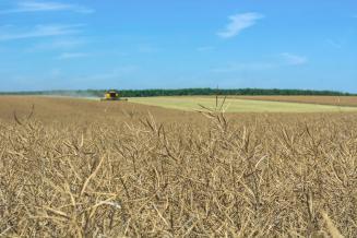 Свыше 27 млн руб. получила Иркутская область на производство масличных культур