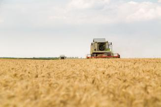 В Ивановской области на91,2% завершена уборка зерновых культур