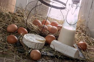 В Челябинской области растет производство молока, яиц и свинины в сельхозорганизациях