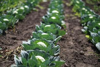 12 млн руб. направят на поддержку овощеводства в Амурской области
