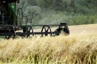 Д. Хатуов: Минсельхоз ожидает производства масличных в РФ на уровне 21,5 млн тонн