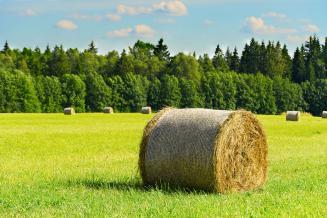 В Вологодской области заготовлено в 1,7 раза больше сена, чем год назад