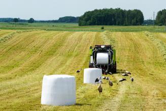 Аграрии Калининградской области заготавливают корма
