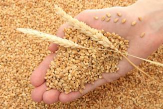 Минсельхоз подтвердил прогноз урожая зерна в РФ в 2020 г. в размере 122,5 млн т