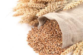 Алжир может смягчить требования к качеству импортируемой пшеницы