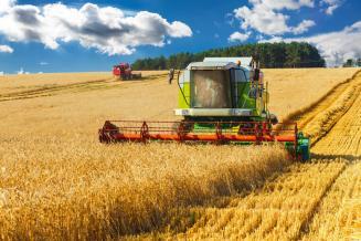 В Орловской области урожайность зерновых выше прошлогодней на 12,5%