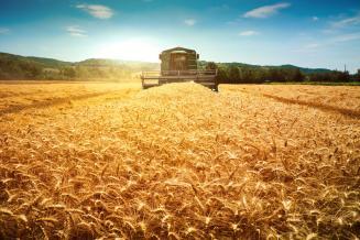 В Самарском регионе близится к завершению уборка зерновых и зернобобовых
