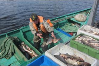 Свыше 5 тыс. т рыбы добыто на Ямале с начала года