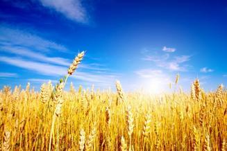 Правительство подготовило план мероприятий по развитию зернового комплекса