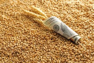 Минсельхоз рассчитывает на увеличение экспорта продукции АПК в Египет