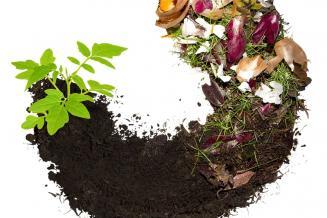 В Томской области развивается переработка сельскохозяйственных отходов