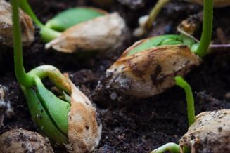 Обеспеченность российского АПК семенами отечественной селекции составляет 62,7%