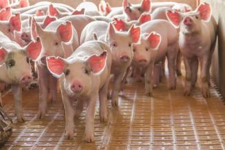 Импорт живых животных в Курскую область сократился на 48,8%