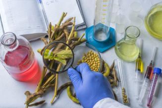 Российские ученые разработали математическую модель для ускорения селекции растений