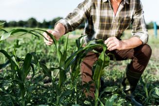 Трактористы и агрономы — самые востребованные профессии в АПК