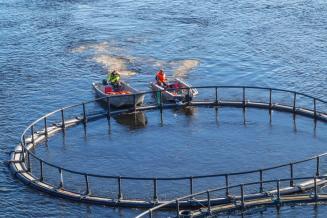 В. Путин отметил ритмичную работу рыбной отрасли
