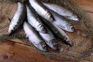 Российские рыбаки добыли более 4,2 млн т водных биоресурсов