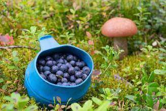 В прошлом году вРоссии собрали около 65 тгрибов и 54 т лесных ягод