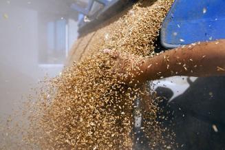 Турция обнулила таможенные пошлины на импорт пшеницы, ячменя икукурузы до конца года