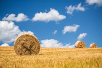 Россия наращивает экспорт сена