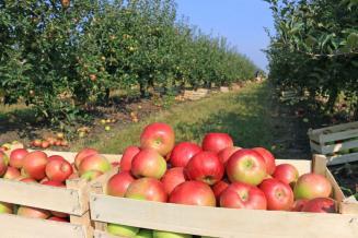 Чеченские аграрии более чем вдвое перевыполнили план закладки садов