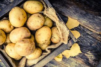 Производство картофеля в РФ достаточно для покрытия внутреннего спроса — Минсельхоз
